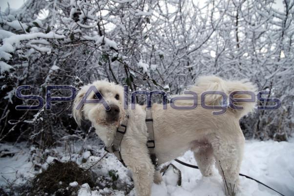 Snow Dog 131218D-3857.JPG