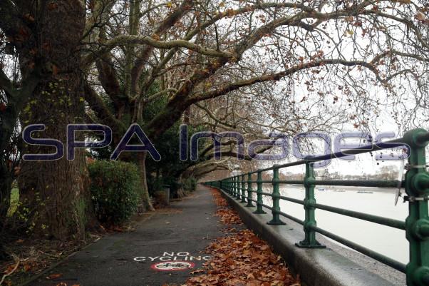 Pathway Leaves Fulham 281118D-0156.JPG