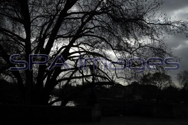 Tree Silhouette Richmond 211218D-6556.JPG