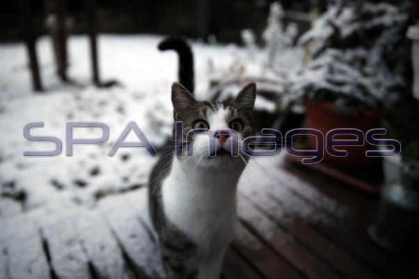 Snow Cat 131218D-2674.JPG
