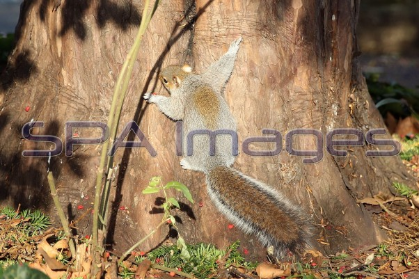 Squirrel 041218D-0960.JPG