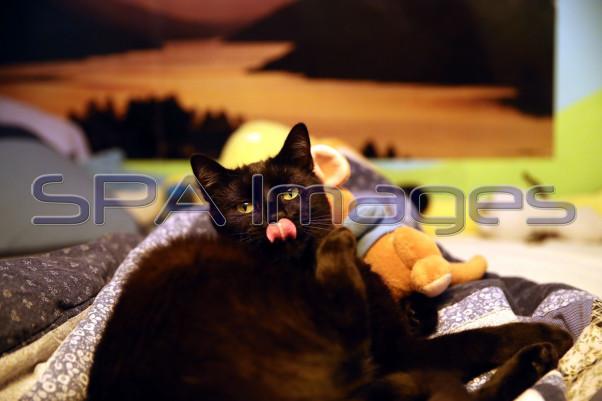 Cat 141218D-4665.JPG
