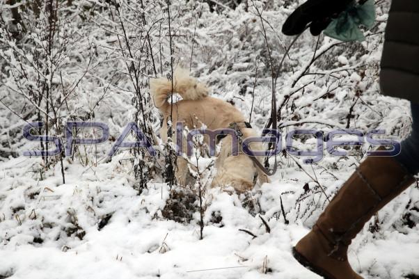 Snow Dog 131218D-3711.JPG