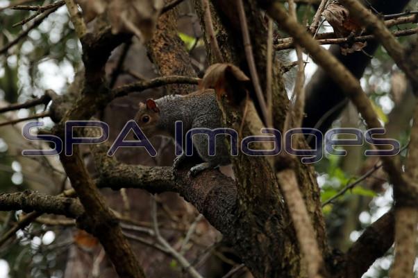 Squirrel 281118D-0230.JPG