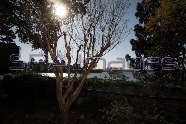 Tree Sydney Harbour 170917D-0038.JPG