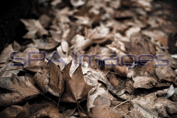 Leaves 281118D-0048RR.jpg