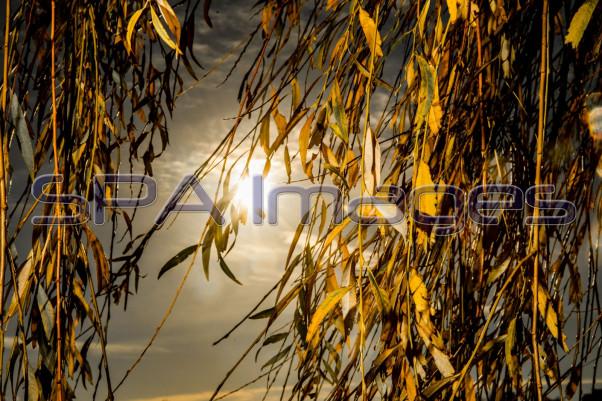 Yellow Trees Thames Walk 041218D-0881R.jpg