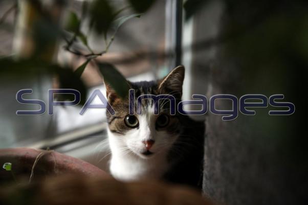 Cat 141218D-4690.JPG