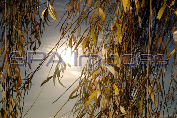 Yellow Trees Thames Walk 041218D-0882.JPG