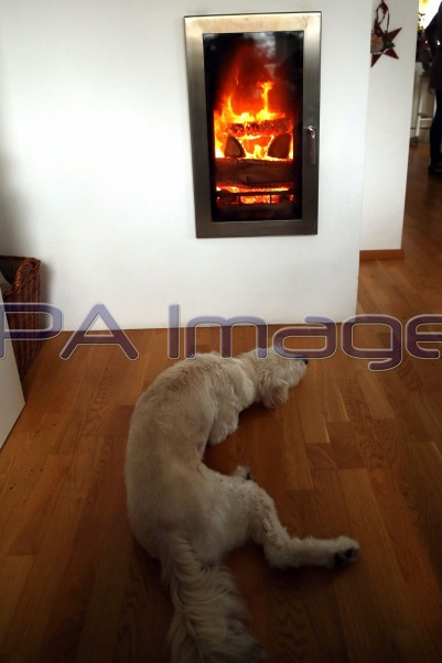 Dog by Fireplace 131218D-4118.JPG