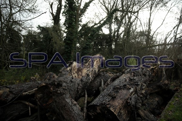 Old Deer Park Richmond Fallen Tree Logs 211218D-6794.JPG