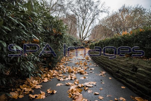 Path Leaves 281118D-0006RR.jpg