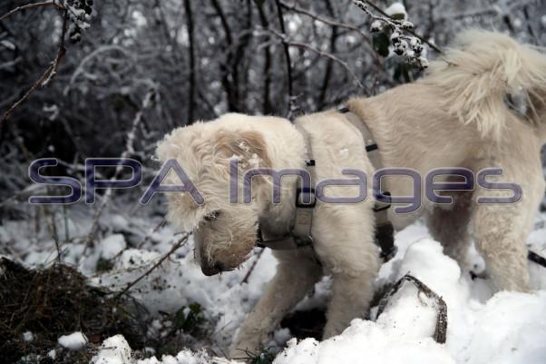 Snow Dog 131218D-3846.JPG