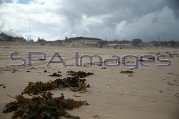 Seaweed Bondi Beach 230415D-2147.JPG
