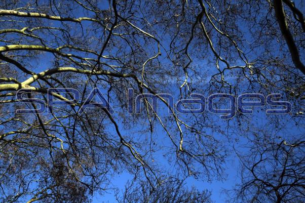 Trees 041218D-1084.JPG