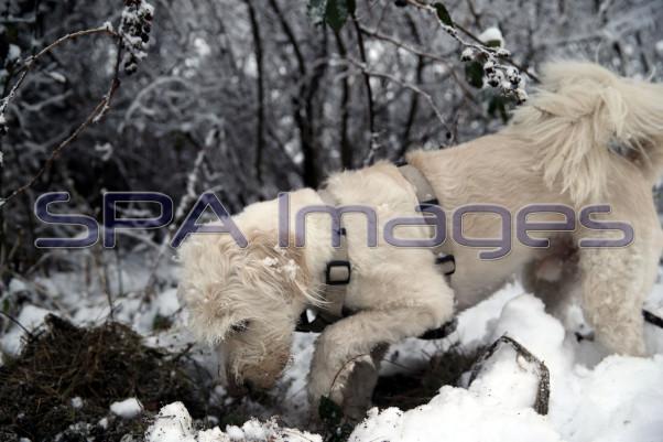 Snow Dog 131218D-3849.JPG