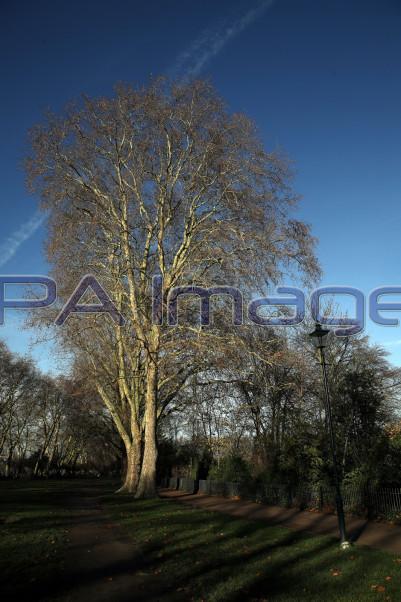 Trees Thames Walk 041218D-1035.JPG