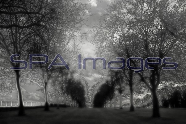 Tree Silhouette 301118D-0747R.jpg