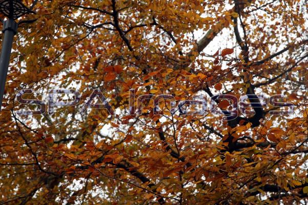 Trees 281118D-0290.JPG