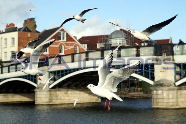 Seagulls 301118D-0636.JPG