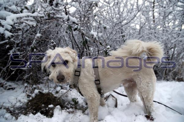 Snow Dog 131218D-3855.JPG