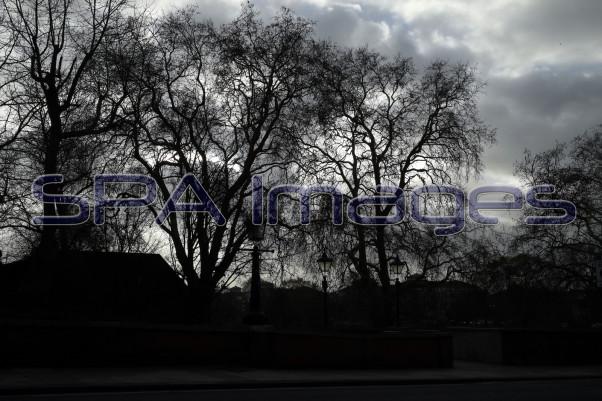 Tree Silhouette Richmond 211218D-6544.JPG