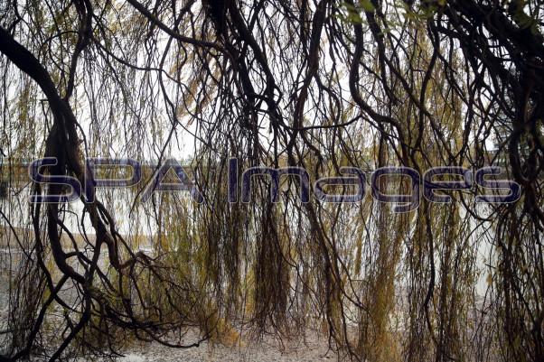 Trees 281118D-0319.JPG