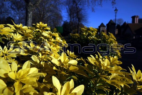 Yellow Flowers Fulham Palace 041218D-1107.JPG